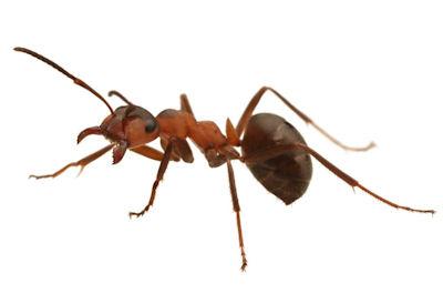 Ants We Control