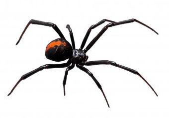 Spider Control Misting System - Stonecreek Solutions LLC