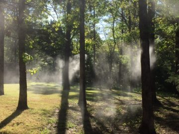 September Reports of The West Nile Virus Further Warrant Extra Precautions Including Fly Spray Systems