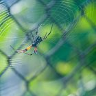 Insect Misting Systems-Spider