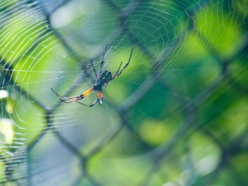 Let's Talk Spiders